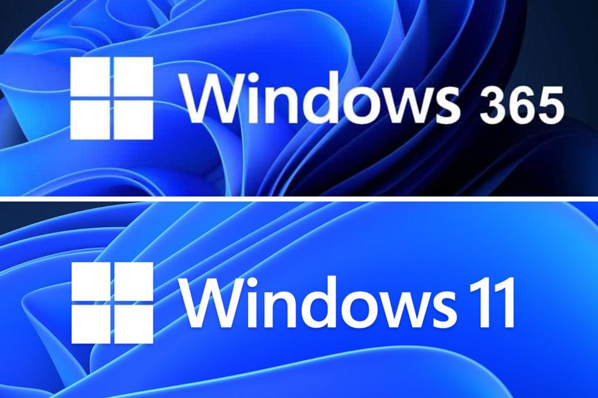 windows 11 windows 365